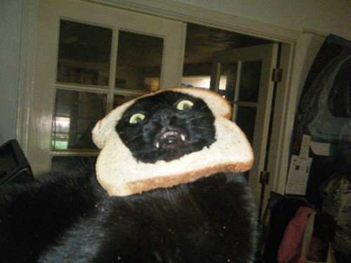 Ok-not related to fashion, but my sis's cat is an internet superstar on breadedcats.com :D ! Like Mr. Chaddy, the ultimate 'Breaded Cat.'
