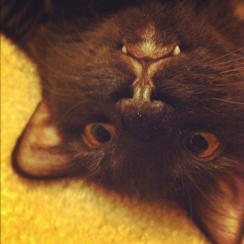 Look at this upside down. (Taken with instagram)