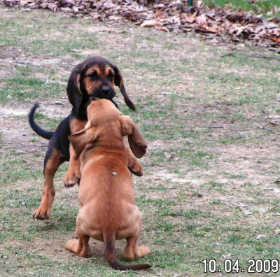 fyeahwrinklydogs:  Credit: Dog Breed Trainings