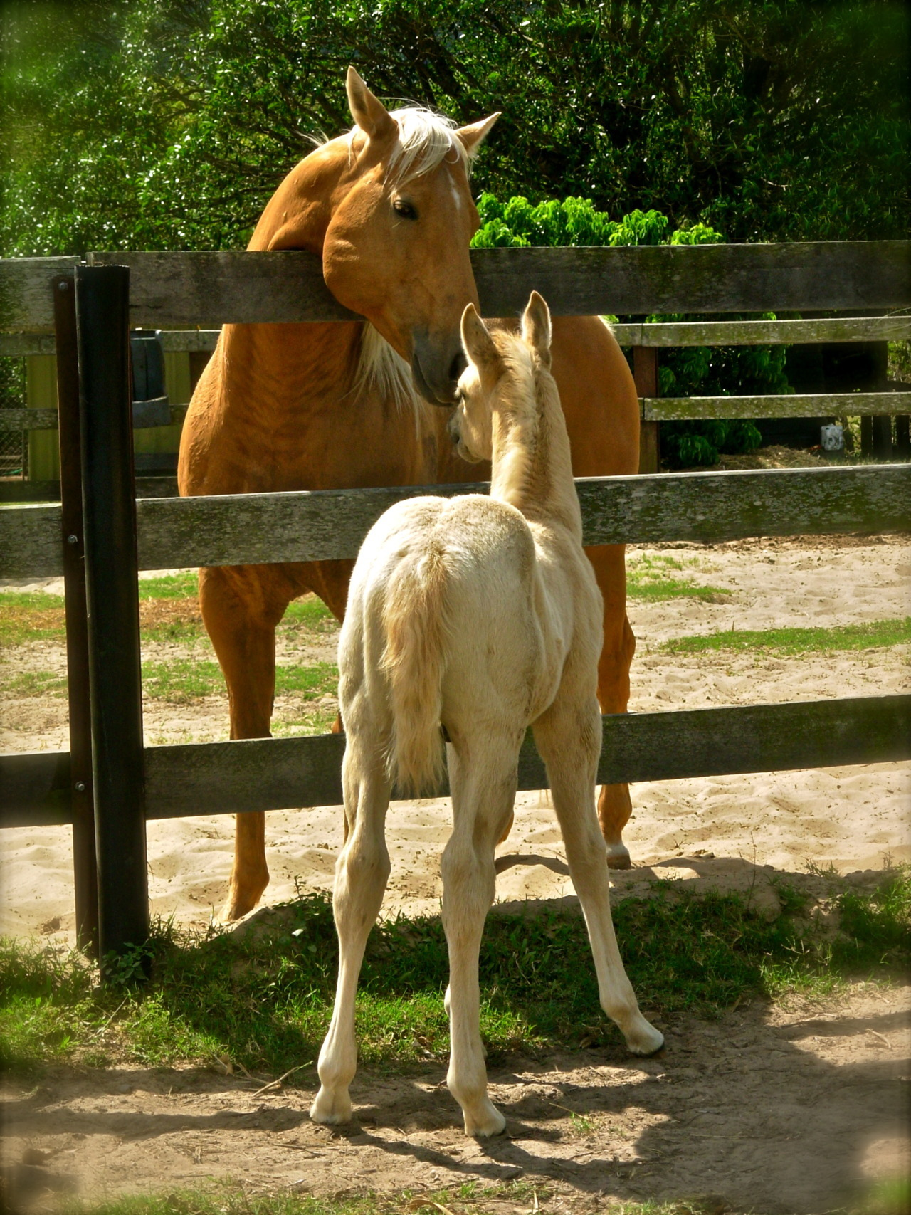 illflyawaywithallmyhorses:  Father and son #2