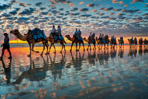 """Camels at Sunset"" by Symoto"