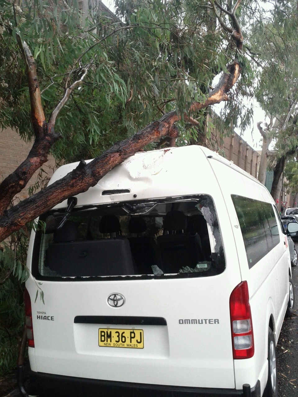 Car Killed by tree. Tree killed by truck.