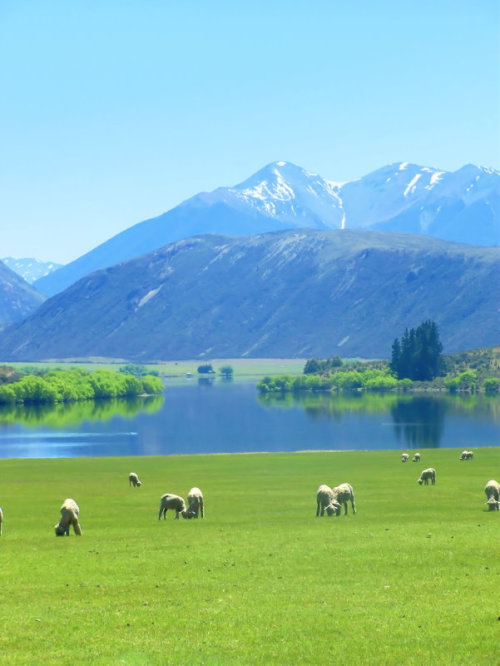 explore-the-earth:  Canterbury, New Zealand