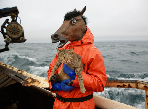 Huh, it's a kitty-horse-fisherman!