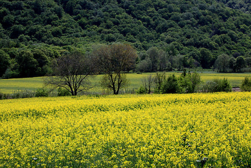 exvin:  Tangrah/ Golestan Province by HORIZON on Flickr.