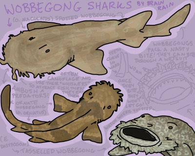 "Three of the twelve species of Wobbegongs. Oh yeaaaaaah! Wobbegongs are carpet sharks in the family Orectolobidae. Their name means ""shaggy beard"" in some Australian Aboriginal dialect. I think. They hang out around Australia, though. Strange as they are, they're actually really beautiful. Even though I gave up drawing them like this, they are naturally bilaterally symmetrical. Also there's this, which is the gosh darn most adorable thing I've ever seen. I don't know what happened with that one on the bottom right. He's all like, ""You shall not pass!"" Day 5 of Shark Study Week. *EDIT* - So I thought something was off with the one demonstrating the teeth. It looks like I drew the whiskers on the upper lip as opposed to the bottom lip, where they would be. Don't know why I drew it like that. I don't want you guys to go around thinking wobbegongs have weird little mustaches as opposed to weird little beards. Hopefully I'll remember to fix it sometime. Sorry."