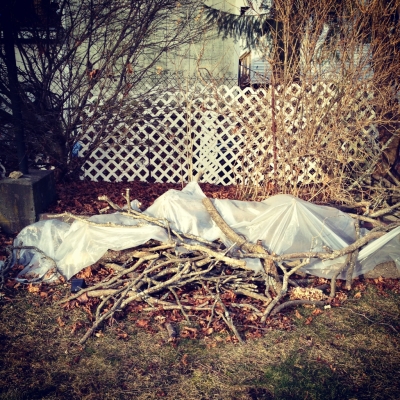 The remains of my parents' Dogwood
