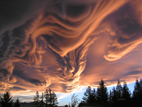 fuckyeacoolpictures:   New Zealand cloud at sunset Glorious
