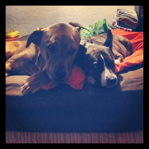 And they called it puppy love (Taken with instagram)