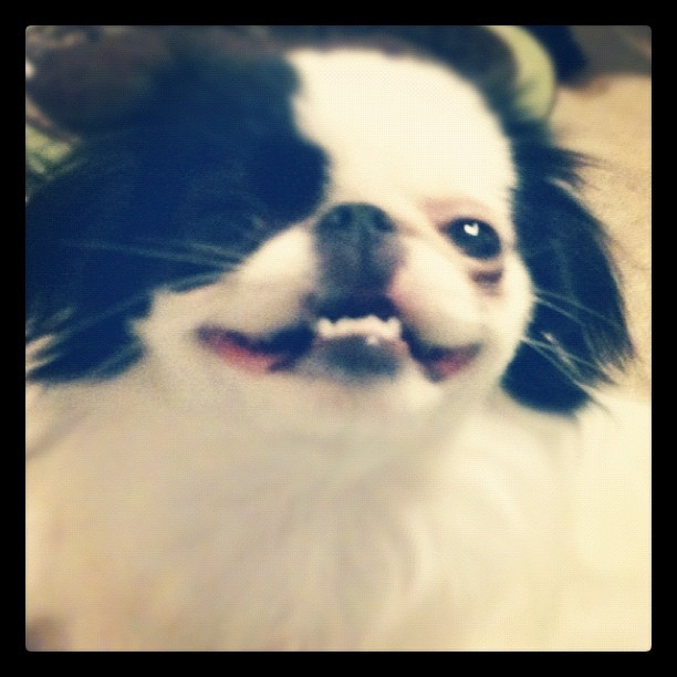 The derpiest face ever (Taken with instagram)