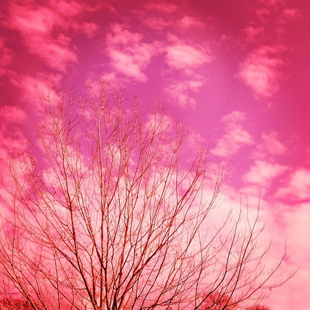 Taken through my Willy Wonka Goggles. #tree #branches #pink #color #sky #clouds #photography (Taken with instagram)