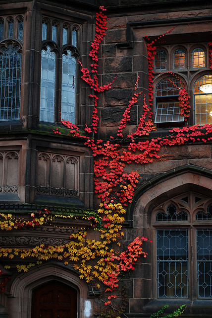 harvestheart:  Princeton Ivy League Autumn