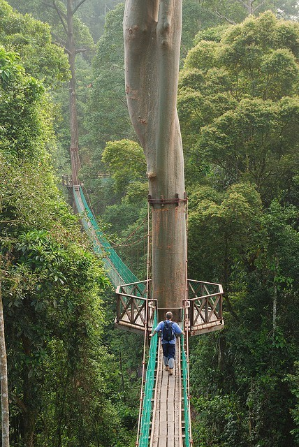 rdtrip:  Borneo Rainforest canopy walkway.