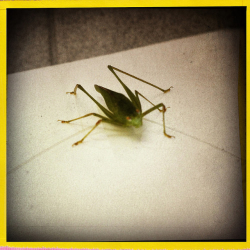 #monster Insect on Flickr.#monster 2