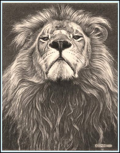 'Head of the Family' - Lion - Fine Art Pencil Drawings  www.drawntonature.co.uk by kjhayler on Flickr.