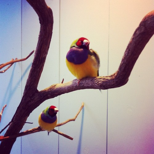 birdies.  (Taken with instagram)