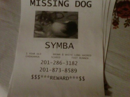 theprettylittleblogger:  Hi everyone! My friend lost her dog (Symba) in the Northern New Jersey area. Her other dog just passed away so she is already sad about that. I'm hoping that I can get some help trying to look for Symba. Thank you <3 Please reblog! It could help!