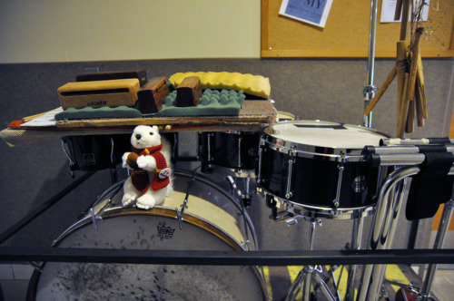 albusthesquirrel:  Perhaps I should learn to play drums. I am already quite good at hitting acorns together.