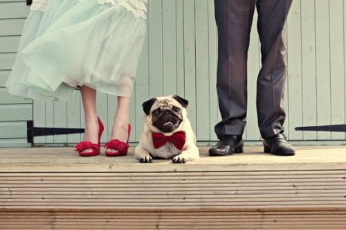 (vía Puppy love! {Pets in Weddings} | Engaged & Inspired)