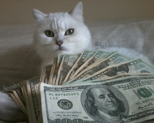 cashcats:  cat city bitch cat cat city bitch ten ten ten twenties on ya kitties bitch