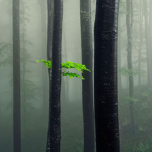 allesistverbunden:  thesthr:  valscrapbook:  woodendreams: (by Evgeni Dinev)  wow  here!