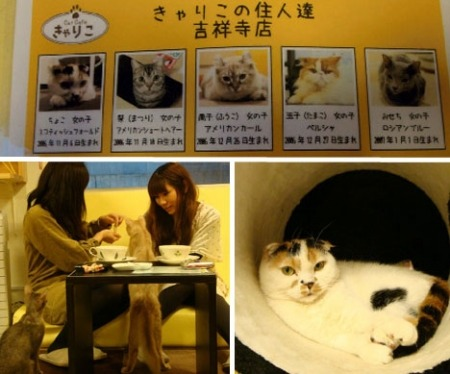 In other news, IAEA reports…HOLY SHIT Japan has CAT CAFES!!! Stop the presses!!! Stop the presses!!! And why don't we have this here in the USA??? I believe there is currently a Cat Cafe gap between the US and Japan that should be rectified.  Why the fuck isn't Santorum on top of this shit! Fuck!?! And don't for get, Romney already has a dog gap issue to deal with, srsly! Lol!!!! (Via yahoo.com/news) How will this crucial issue affect your vote in the Republican Primaries???