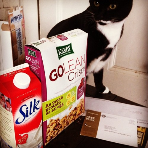 Which should I eat first? The delicious new cereal or the cat?  (Taken with instagram)