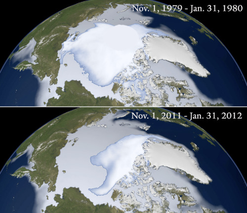 'NASA Images Depict Rapid Loss of Thick Arctic Sea Ice', 1980 - 2012 From Yale e360:  A new comparison of satellite images from 1980 and 2012 vividly depicts the rapid disappearance of thick, multi-year Arctic Ocean ice in winter. Over the past three decades, the extent of the Arctic's thickest ice has declined by 15 to 17 percent per decade, according to NASA climate scientist Joey Comiso.  Details over at Yale e360 and NASA's Earth Observatory. It's also worth noting that a new study has found an important link between melting Arctic sea ice and extreme weather being experienced in some regions of our planet. BBC coverage of the study explains that: The progressive shrinking of Arctic sea ice is bringing colder, snowier winters to the UK and other areas of Europe, North America and China. More here.