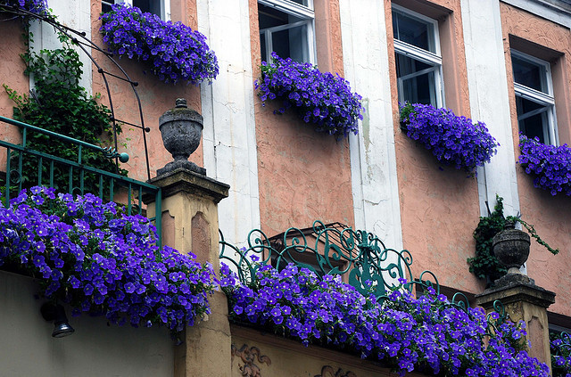 elorablue:  Facade With Purple Flowers by Bachspics on Flickr.  So proud of my high school friends <3 Some of them are going off to different countries in Europe as part of Ateneo's Junior Term Abroad program! My best friend, in particular, will be going to Regensburg, Germany (where this photo was taken HAHA), I think. I'm going to miss them terribly, but I'm so excited for them <3 It sounds like it's going to be quite an amazing few months for them :)