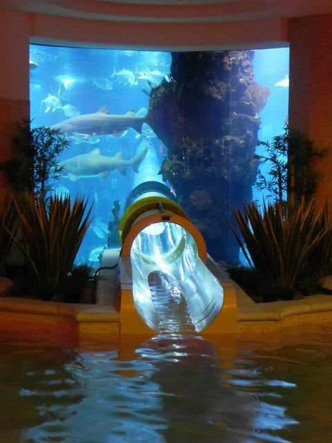 homedesigning:  Aquarium Slide at Golden Nugget, Las Vegas