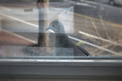 Oh hey there bird on my windowsill!