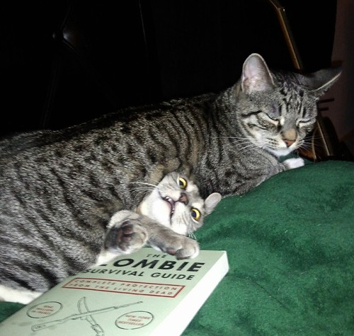 getoutoftherecat:  this is zombie survival 101 cat. you should have paid more attention.