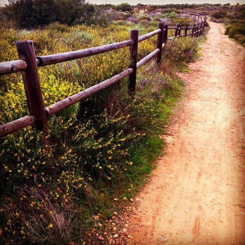 andyjohnson:  Walking along {Mission Trails 5} (Taken with instagram)