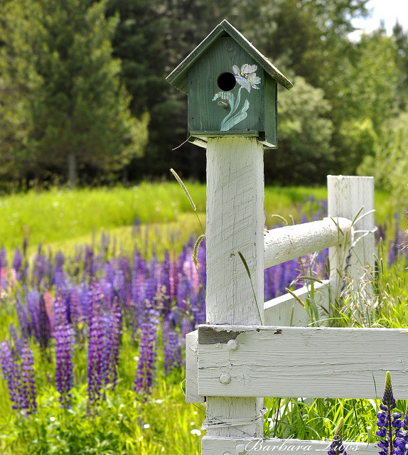 agoodthinghappened:  Green Birdhouse Fence by misst.shs on Flickr.