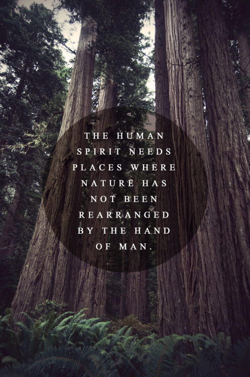 The human spirit needs places where nature has not been rearranged by the hand of man.