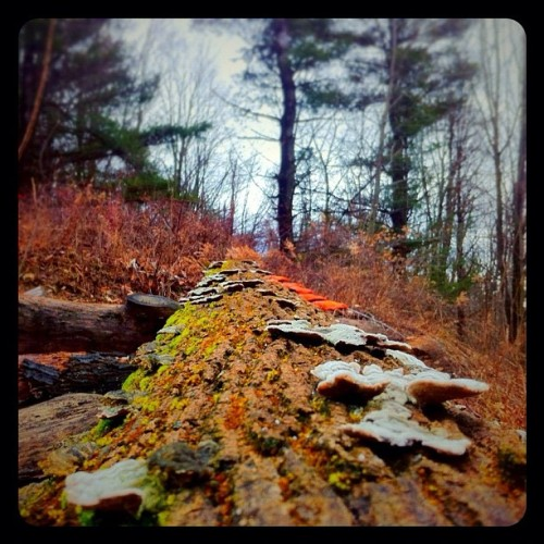 I saw this #mossy #log just up the hill from where I live. #upstate #newyork #phoneography  (Taken with instagram)