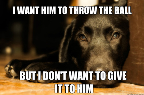 bunnyfood:  First World Dog Problems