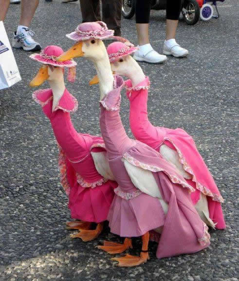 Bridesmaid dress idea izkyoot:  geese wearing dresses  画