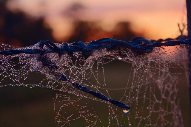 Wiring & Webs early morning by Sterling67