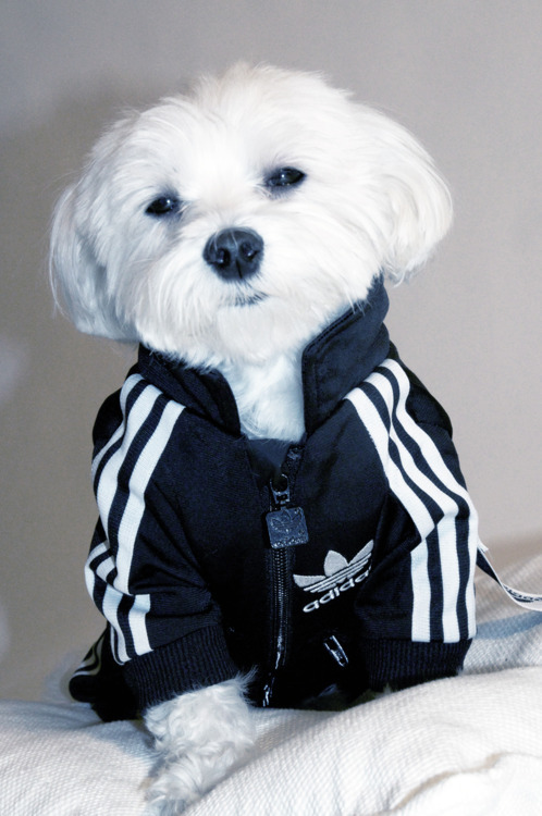 gizmo needs this he would look so fresh