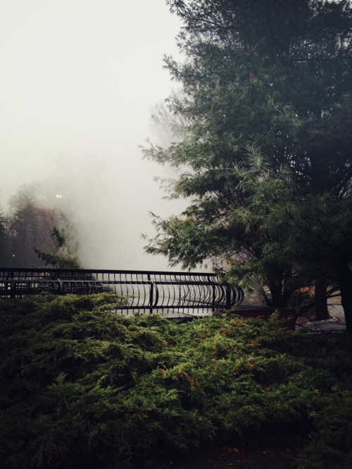 mcswag126:  Central Park- Bryanteslava