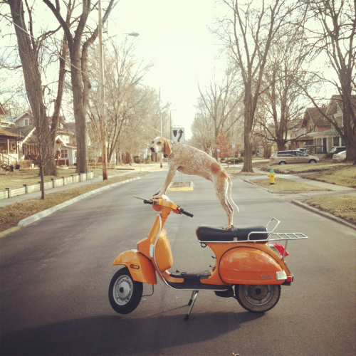 maddie never gets old. especially on a scoot!