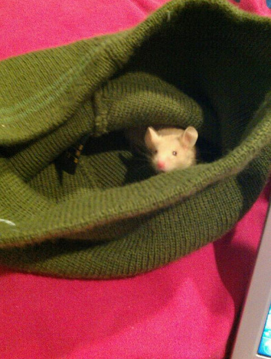 my mouse likes to hide in my beanie. and just stay in there while i'm on the computer. :))