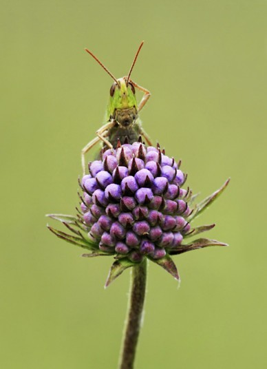 allcreatures:  Matt Cole, Confused Grasshopper. Finalist, Wildlife Havens. Picture: Matt Cole (via International Garden Photographer of the Year 2012 competition - Telegraph)