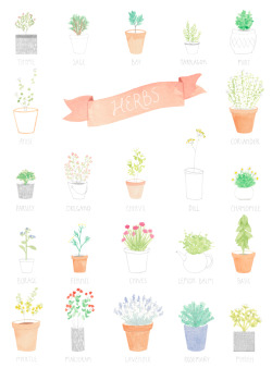artpixie:  illustrated chart of herbs by Amy Borrell