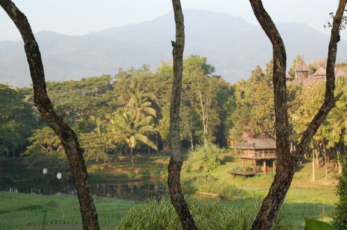 Lush rice paddies in northern Thailand = the perfect antidote to gray, winter weather.