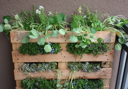 Wow, pallet gardens (: I love this because K's current job is to tear down pallets- he would have less work to do if people recycled pallets! You can usually get pallets free at your local grocer, or dollar store. Thank-you Life On The Balcony