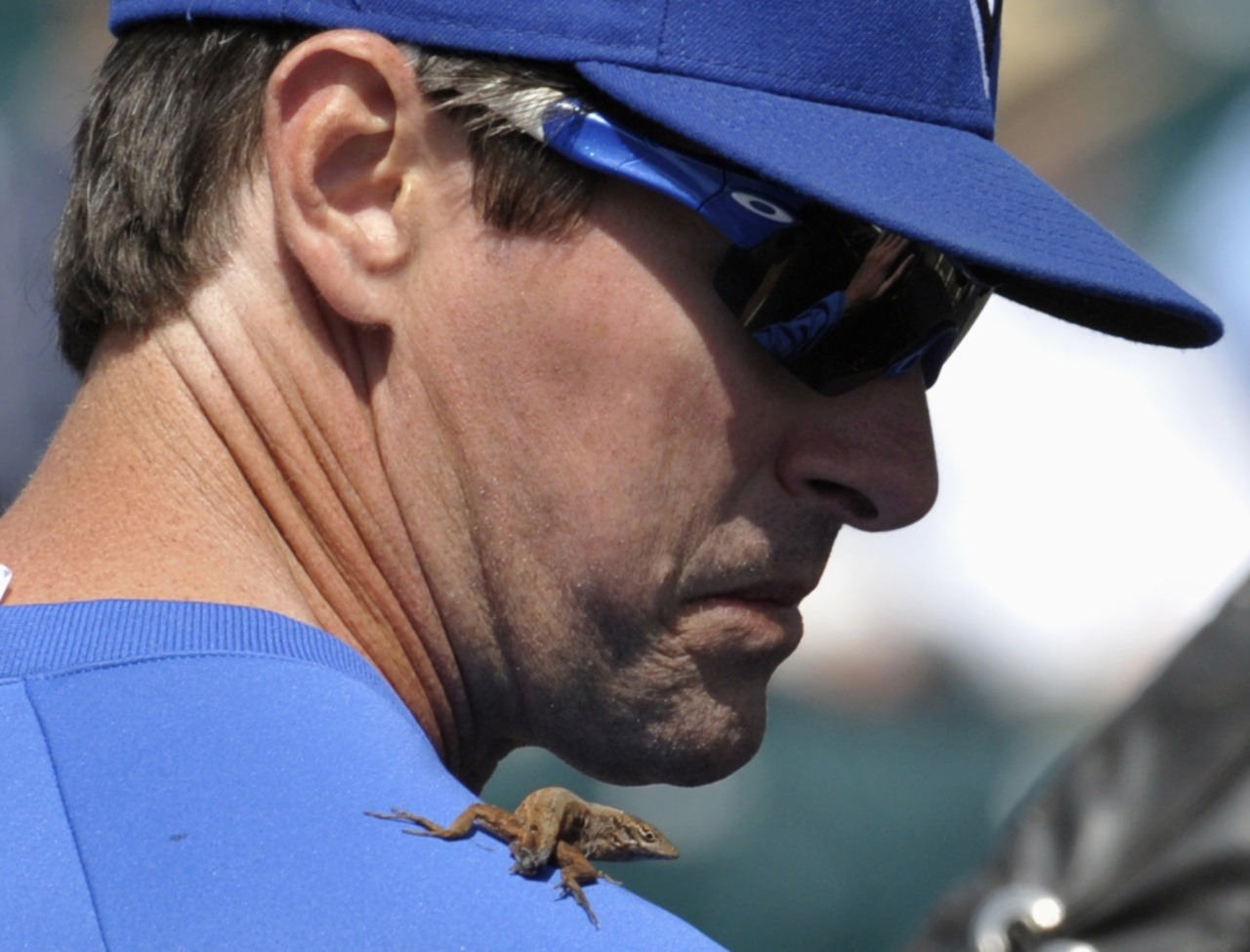 Toronto Blue Jays minor-league hitting coach Chad Mottola looks at a small lizard that one of the players put on his shoulder before their Grapefruit League baseball game against the Pittsburgh Pirates in Bradenton, Florida March 4, 2012. The Jays won 8-5.Photo: Mike Cassese/Reuters