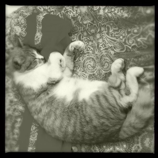 Sleeping cat Americana Lens, Claunch 72 Monochrome Film, No Flash, Taken with Hipstamatic