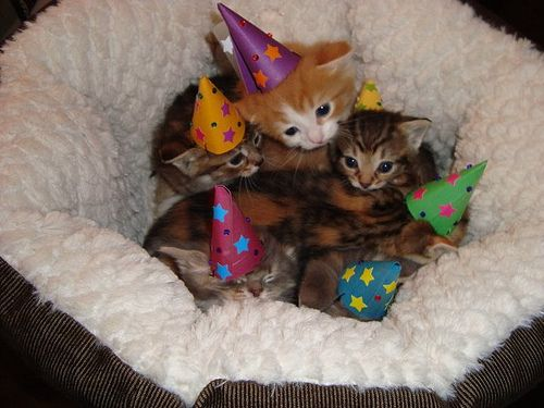 Kittens in birthday hats. So cute.